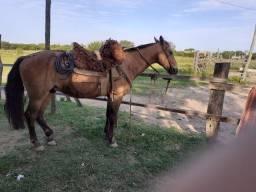 Cavalo campero manso brik