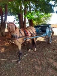 Engate Égua e carroça