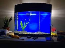 Título do anúncio: Petz Aquário Curvo Aquaterrário para Peixes com Suporte Transparente - 72L