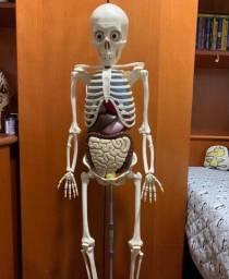 Coleção Corpo Humano Salvat Esqueleto Completo E Fascículos