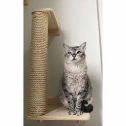 Arranhador gato parede