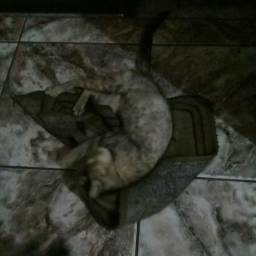 Doação urgente. de uma gatinha