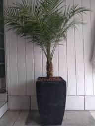 Vaso concreto c/planta