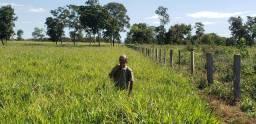 Sítio com 25 hectares de terra de cultura a 63 km de Cuiabá