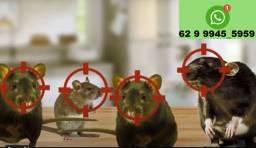 Exterminio de Ratos e camundongos