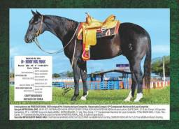 Cavalo quarta de milha