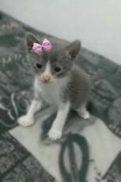 Gatinha cinza com branco