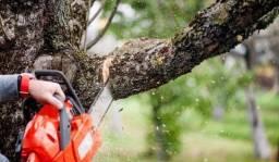 Poda de árvore / limpeza de chácara