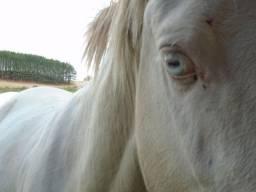 Égua Prenha de Garanhão 2 Olho Azul +Promoção