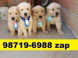 Canil Filhotes Cães Perfeitos BH Golden Pastor Akita Rottweiler Labrador Chow Chow