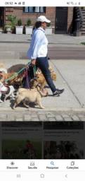 Título do anúncio: Dog walker