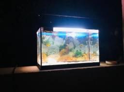 Lindo aquário