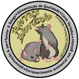 Rattus biotério