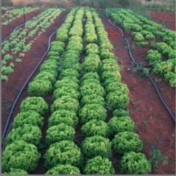 Parceria em produção de Hortaliças Orgânicas