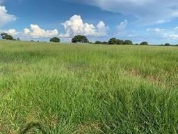Fazenda para pecuária com 355 Hectares