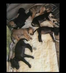 Doação de cachorrinhos