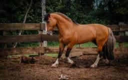 Vendas de cobertura do cavalo!