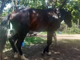 Cavalo skipador