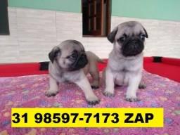 Canil Filhotes Cães Líder BH Pug Bulldog Yorkshire Maltês Lhasa Shihtzu Beagle