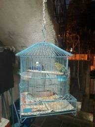 Gaiola Azul casinha
