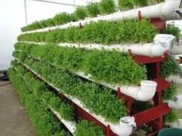 Projeto Horta Hidroponia Orgânica Ecológico Quintal Casa