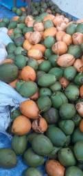 Coco Verde Grande