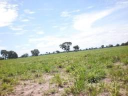 1950 hectares, 790 hectares pasto, Pecuária, Região Barra do Bugres-MT