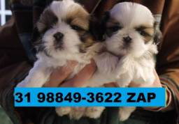 Canil Belos Filhotes Cães BH Shihtzu Beagle Basset Poodle Yorkshire Maltês Bulldog Poodle