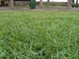 Gramas Verde