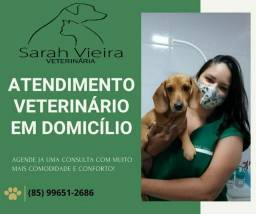 Veterinária em domicílio