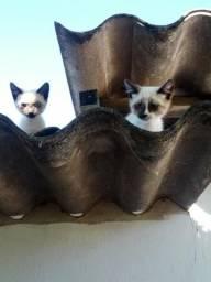 Doa gatinhos