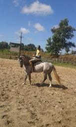 Vendo cavalo qm puro