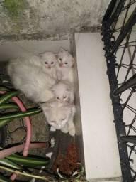 Doa-se dois lindos gatinhos