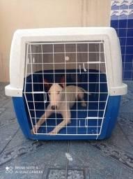 Transporte de pets usada