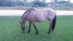 Égua linda