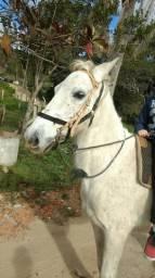 Vende-se cavalo manso sem fraça definida