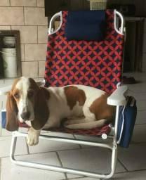 Vendo cachorro basset hound
