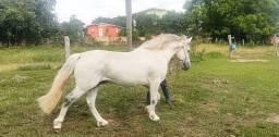 Vendo coberturas Cavalo crioulo confirmado