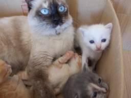Gatos mestiços
