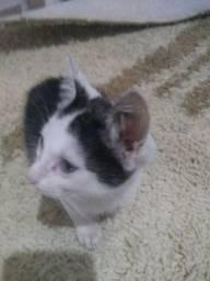 Doação de um gatinho