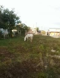 Vende-se cavalo crioulo