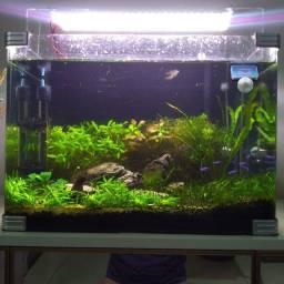 Vende-se mudas de plantas aquáticas