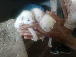 Gatos ora adoção