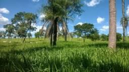 Fazenda 36 alqs em Formosa - DF/GO, excelente de terra e infra, pecuária intensiva!!