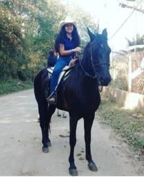 Cavalo preto, 4 anos
