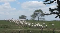 Fazenda Jabuticaba - 400 Tarefas