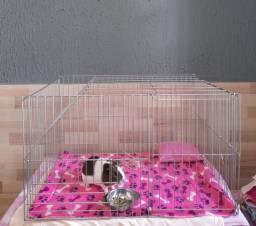 Vendo gaiola para porquinho da Índia