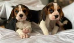 Beagle chamar no whats para informações * Lauany
