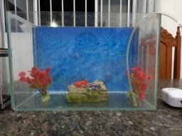 Aquário para peixes ornamentais de 10 litros acompanha combo com todos os acessórios