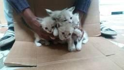 Gatinhos para doação